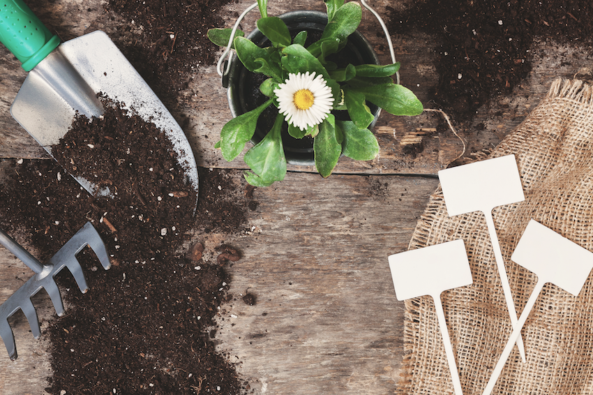 Soil with shovel, potted plant and plant labels