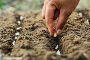 Gardening tips and tricks: Hand planting seeds in soil